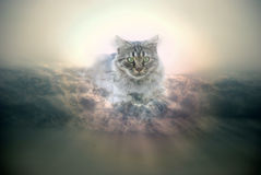 Sky cat Royalty Free Stock Photos