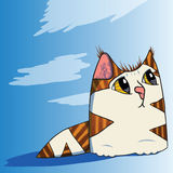 Sky cat Stock Photos