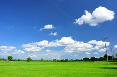Sky and Cloud. Blue sky and white cloud at rice field ,Thailand royalty free stock photos
