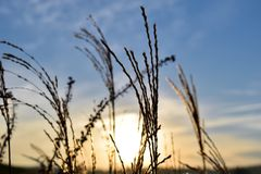 Sky, Cloud, Branch, Atmosphere Of Earth