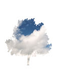 Sky and cloud overlay on a leafy tree Royalty Free Stock Photo