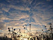 Sky, Cloud, Tree, Atmosphere