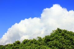 Sky cloud tree. Blue and white & green trees, such as the proportion appears in the picture. Subtly, the same shape as trees and clouds. the clouds in imitation Royalty Free Stock Photography