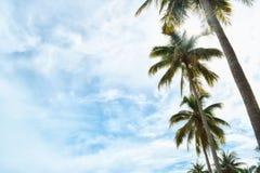 Sky, Cloud, Tree, Palm Tree Royalty Free Stock Image