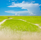 Sky cloud and wetlands background image. Blue sky and the green grass, colorful Stock Photos