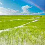 Sky cloud and wetlands background image. Blue sky and the green grass, colorful Royalty Free Stock Images