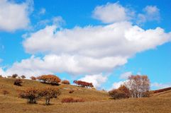 Sky and clouds above upland with autumn trees. Sky and clouds above upland field with  autumn trees Royalty Free Stock Photography