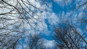 Sky with clouds behind trees stock video