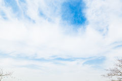 The sky clouds. The blue sky with a little white clouds and branches Royalty Free Stock Photography
