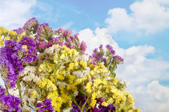 Sky with clouds bunch of colorful wildflowers. The image on background sky with clouds bunch of colorful wildflowers Royalty Free Stock Images