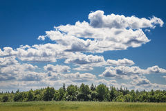 Sky clouds field forest Stock Image