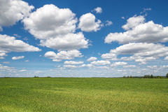 Sky clouds field