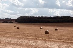 Straw bales on a stubble field. sky in the clouds. field after harvest stock photo