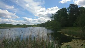 Sky,  clouds and lake, where frogs live... Royalty Free Stock Image