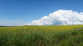 Sky, clouds, meadow Royalty Free Stock Photography