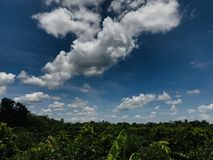 Sky and clouds at noon in Thailand. Scenic, dramatic, calm, still, view, green, tree, plant, agriculture, blue, wide royalty free stock photos