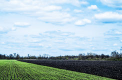 Sky with clouds over green and black fields Royalty Free Stock Photos