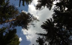 The sky with clouds over a pine forest. royalty free stock images