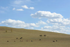 Sky clouds pasture trees horses Stock Photography