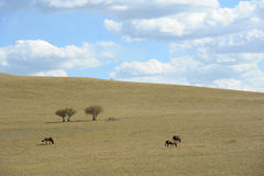 Sky clouds pasture trees horses Royalty Free Stock Photo