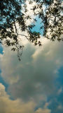 Sky with clouds. Photos from the sky under the tree Royalty Free Stock Photos