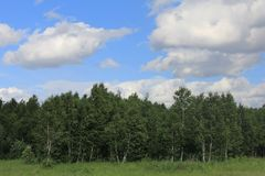 Sky with clouds and pine forest background. ! Stock Photo