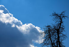 Sky clouds and silhouette tree Royalty Free Stock Photo