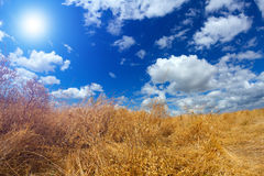 Sky clouds sun dry grass Royalty Free Stock Photo