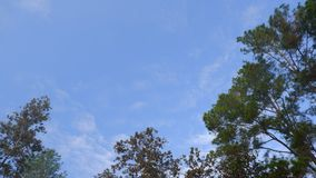 Sky clouds with tree. Blue sky clouds with tree Royalty Free Stock Images