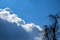 Sky clouds and tree contour Stock Photography