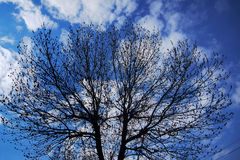 The sky with clouds. Tree silhouette against the sky with clouds Royalty Free Stock Image