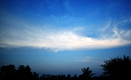 Sky clouds  and trees in the evening Royalty Free Stock Photography