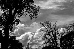 Sky. Cloudy sky with black trees Royalty Free Stock Photos