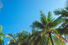 Sky and coconut plam on summer vintage and copy space.  Stock Photography