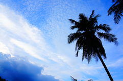 sky and coconut tree Stock Image
