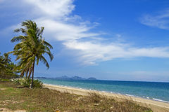 Sky coconut with wind Royalty Free Stock Image