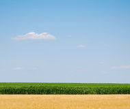 Sky, Corn and Wheat. Image of sky with one cloud, green corn and harvested golden wheat royalty free stock image