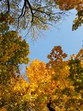 Sky in the crowns of autumn trees. royalty free stock photos