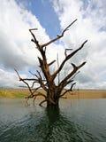 Sky dam tree Stock Image