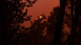 Sky, Darkness, Night, Tree royalty free stock photo