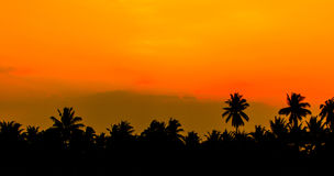 Sky dawn and coconut tree. Background Stock Images