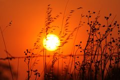 Deep Orange Sky with Plant Silhouettes. The sky is deep orange and the plants are silhouette against the sky. The heat is fierce on this day stock photography