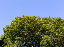 Sky. Deep wood nice blue sky Royalty Free Stock Images