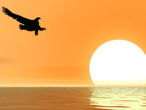 Sky Eagle. Eagle descending in a peach sunset Royalty Free Stock Image