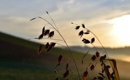 Sky, Ecosystem, Atmosphere Of Earth, Insect royalty free stock photos