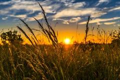 Sky, Ecosystem, Field, Grass royalty free stock photo