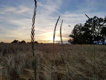 Sky, Ecosystem, Field, Grass Family royalty free stock photos