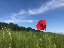 Sky, Ecosystem, Grassland, Field stock photos