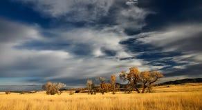 Sky, Ecosystem, Grassland, Prairie royalty free stock photo