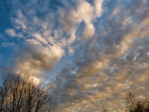 Sky in the evening. With trees Royalty Free Stock Photo